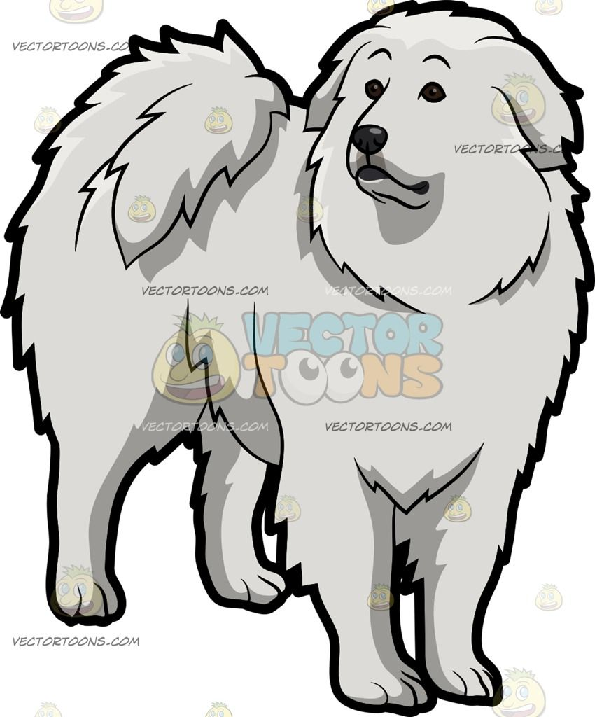 A Curious Great Pyrenees Dog.