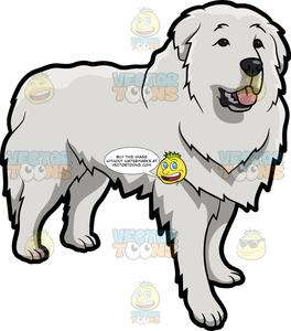 A Cute Great Pyrenees Dog.