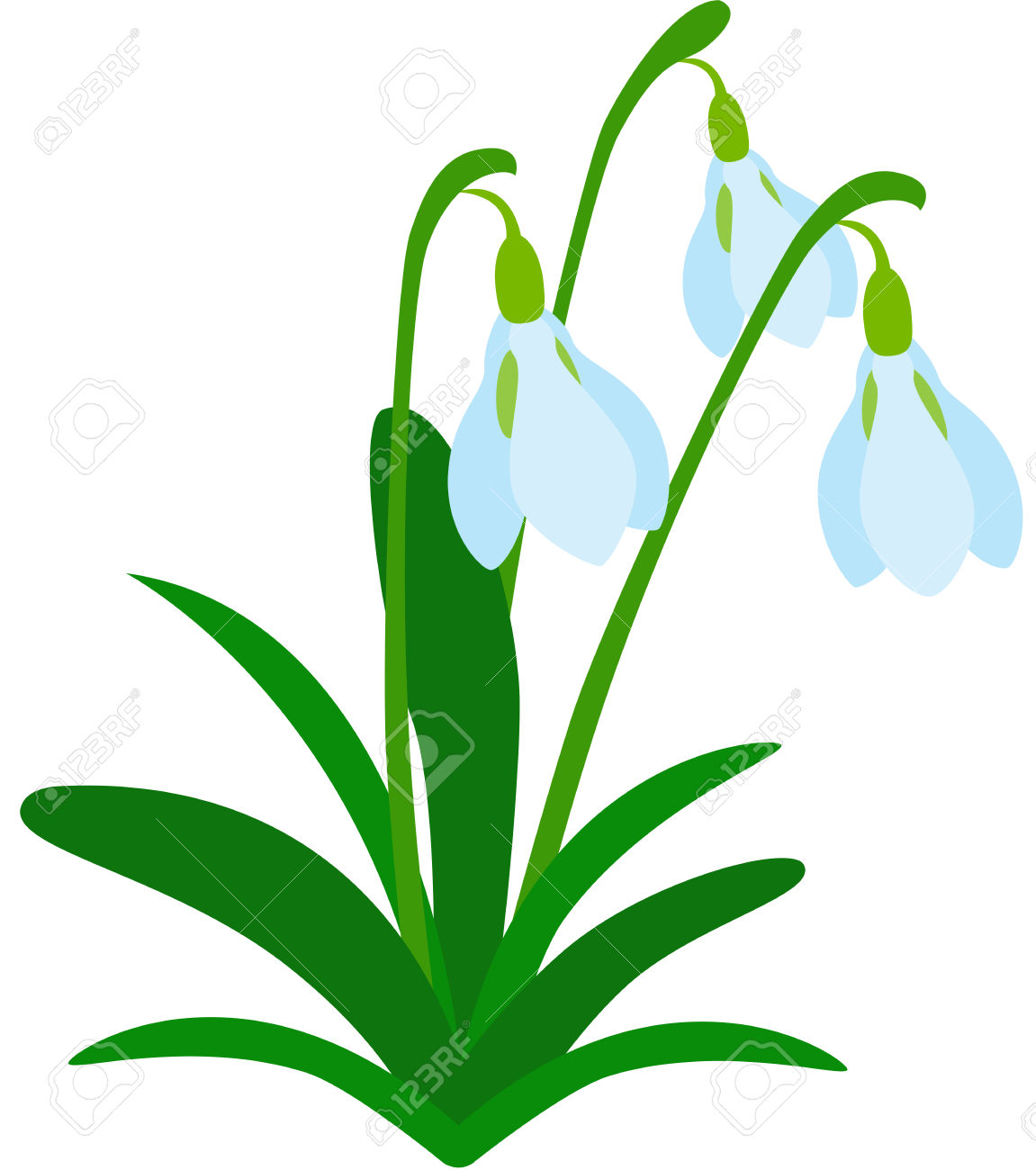 Illustration Of Tree Fresh Snowdrops, Isolated. Royalty Free.