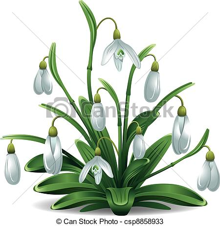 Snowdrop Illustrations and Clipart. 1,149 Snowdrop royalty free.