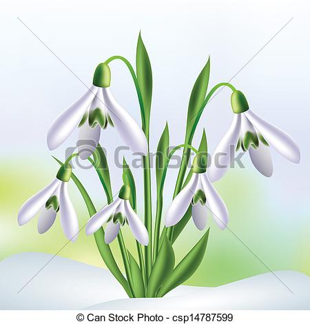 Snowdrops Illustrations and Clipart. 1,140 Snowdrops royalty free.