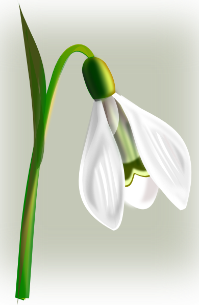 Snow Drop Clip Art at Clker.com.