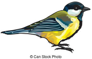 Great tit Vector Clipart Royalty Free. 51 Great tit clip art.