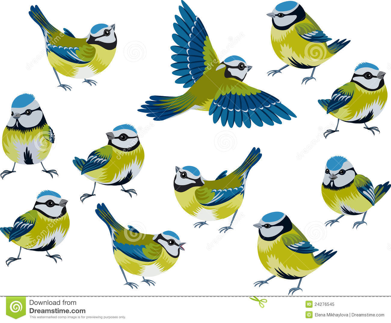 Tit Stock Illustrations.