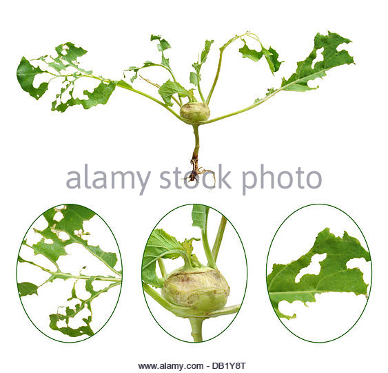 Slugs Cut Out Stock Images & Pictures.