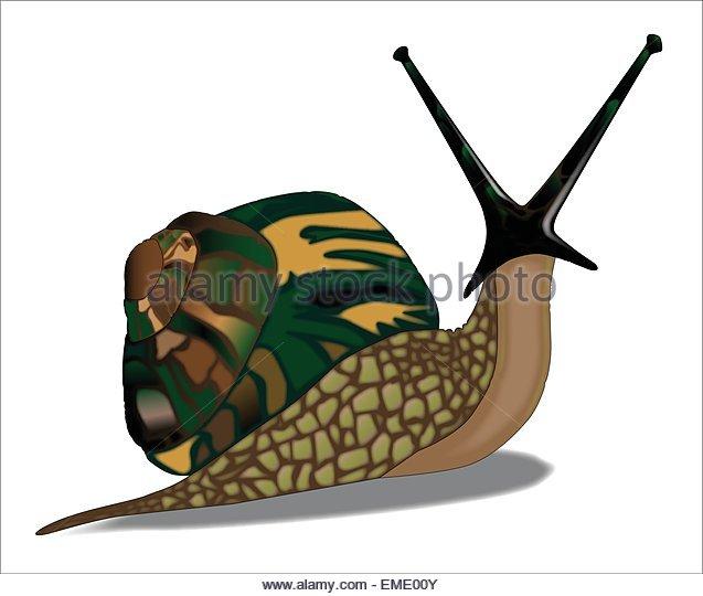 Large Snail Stock Photos & Large Snail Stock Images.