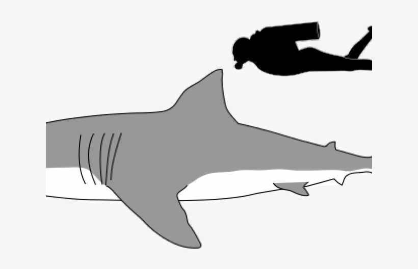 Great White Shark Clipart Foot Long.