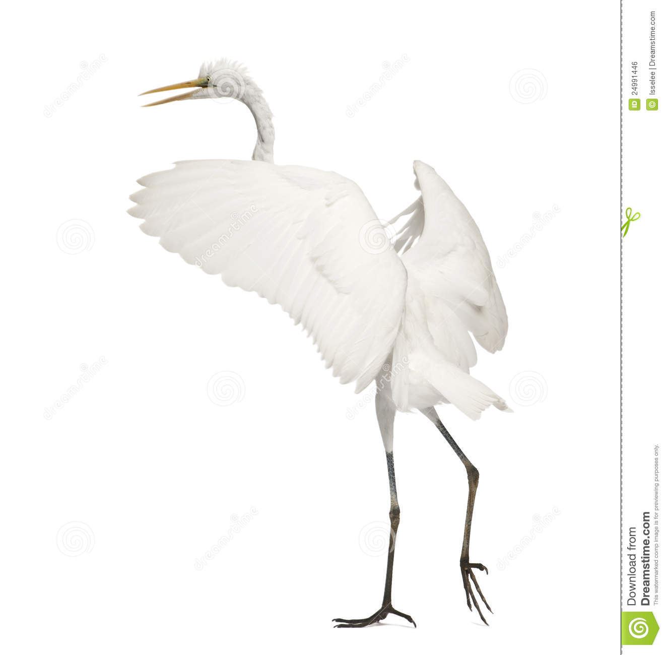Great Egret Or Great White Egret Royalty Free Stock Image.