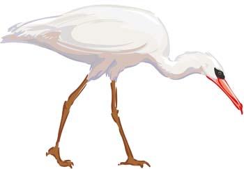 White egret vector 1 clip arts, free clip art.