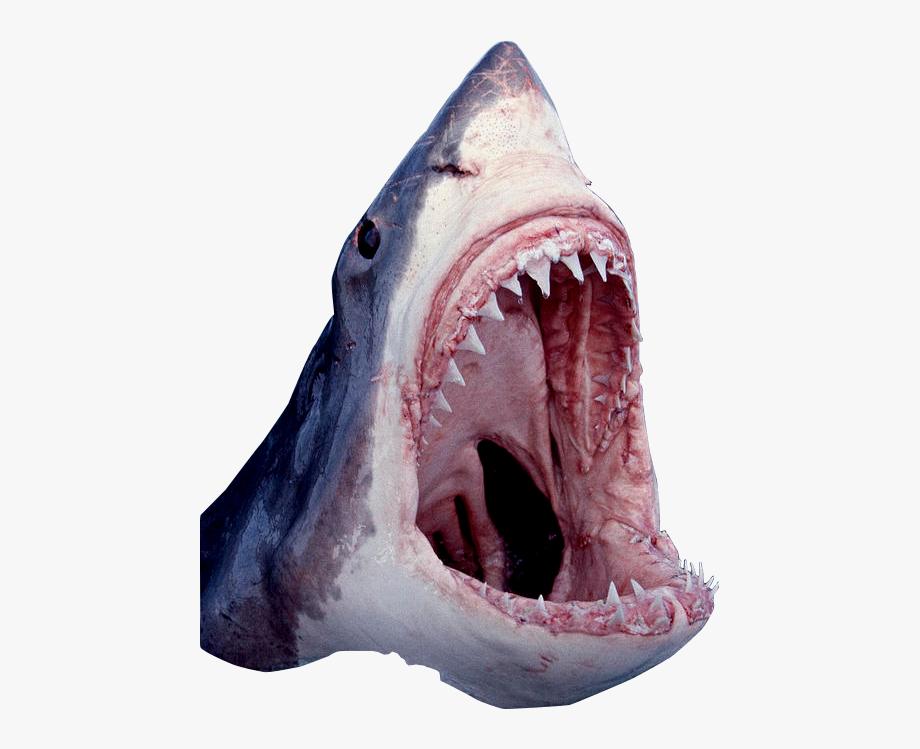 Shark Open Mouth.