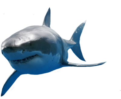 Great White Shark Png Vector, Clipart, PSD.