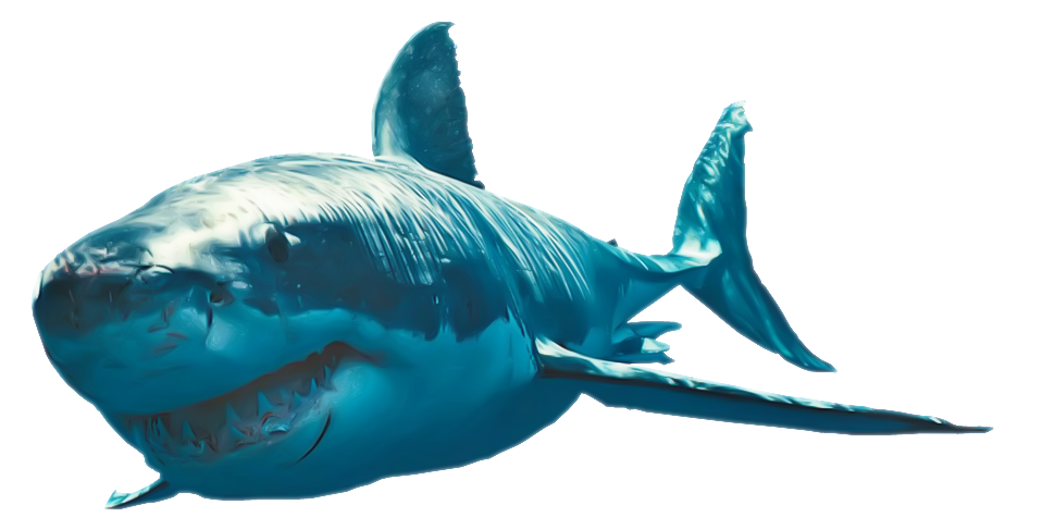 Great White Shark photo png #42748.