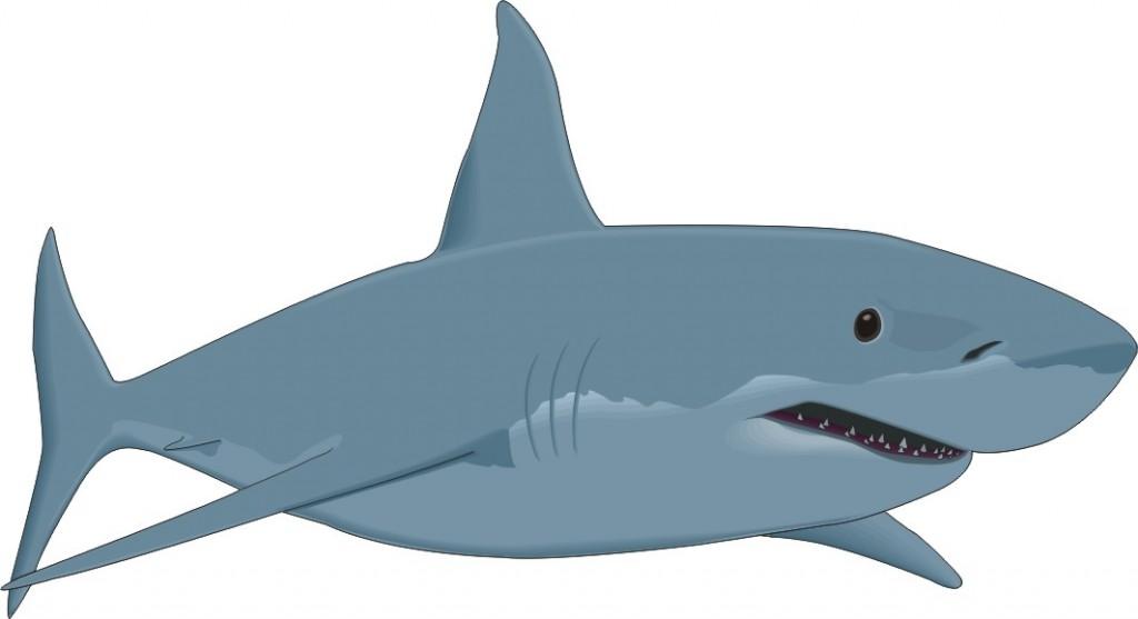 Free Cartoon Great White Shark, Download Free Clip Art, Free Clip.