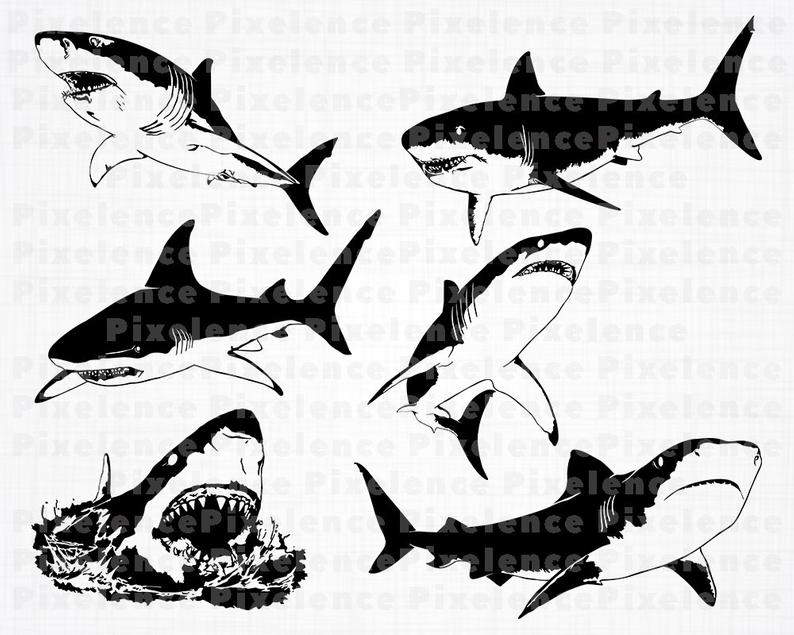 Great White Shark SVG Files, Shark SVG, Shark Clipart, Shark Cut Files For  Silhouette, Shark Files for Cricut, Vector, Dxf, Png, Eps, Design.