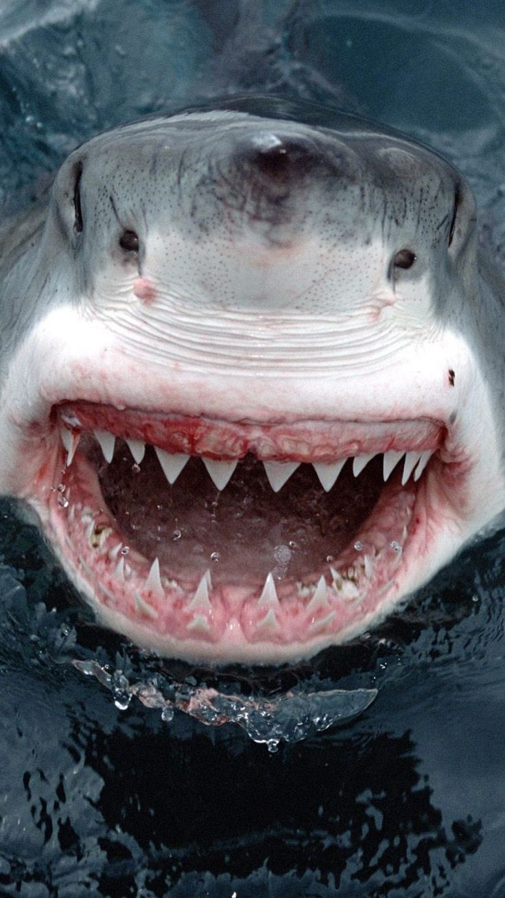 1000+ images about Sharks on Pinterest.