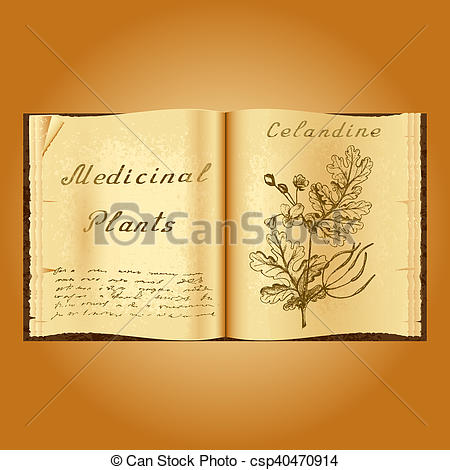 Clipart of Greater celandine. Botanical illustration. Medical.