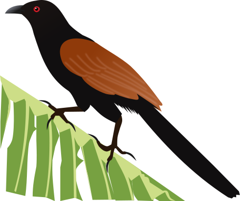 File:Greater Coucal.svg.