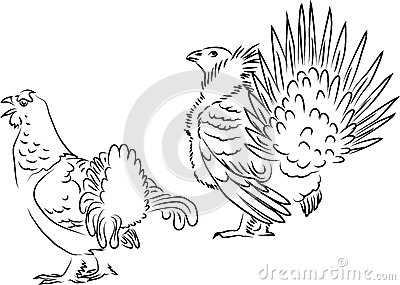 Greater Coucal Birds Stock Illustrations.