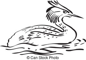 Grebe Illustrations and Clipart. 103 Grebe royalty free.