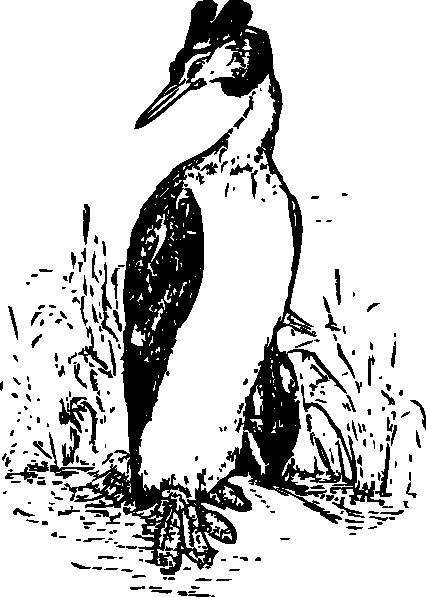 The Grebe clip art Free Vector / 4Vector.