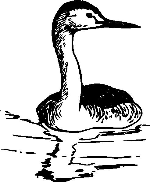 Western Grebe clip art Free Vector / 4Vector.