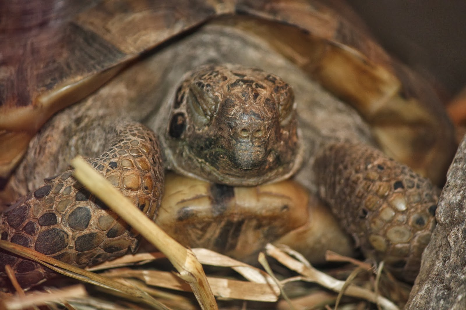 Rules of the Jungle: The Greek Tortoise.