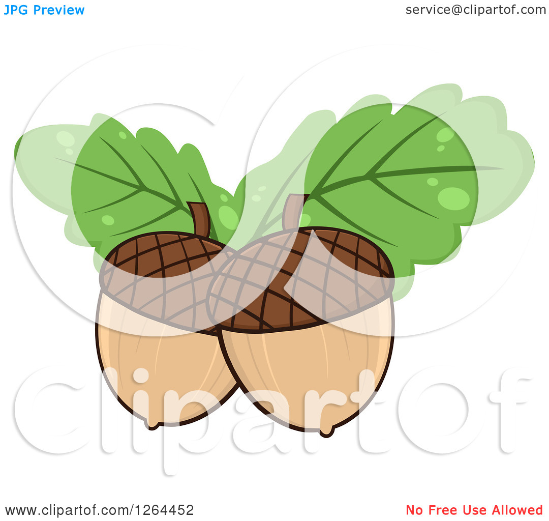 Clipart of Acorns with Green Oak Leaves.