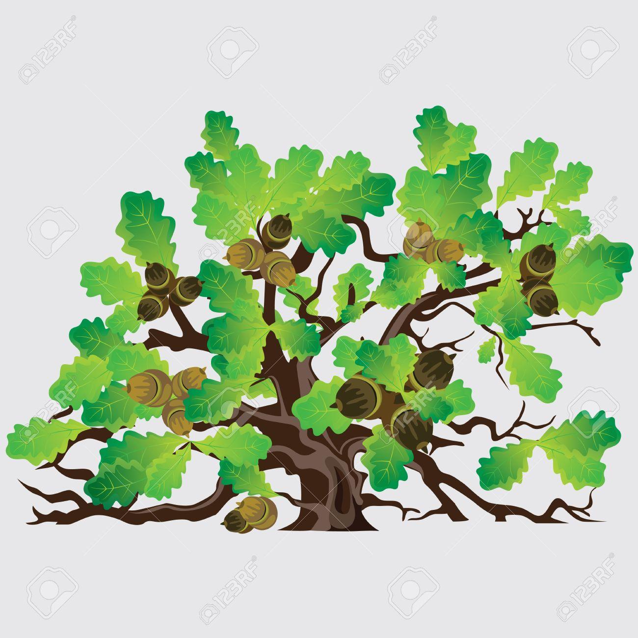 Big Green Oak Tree With Acorns Vector Illustration Royalty Free.