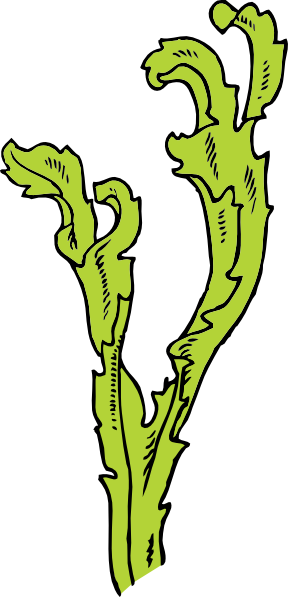 Algae Cartoon Clipart.