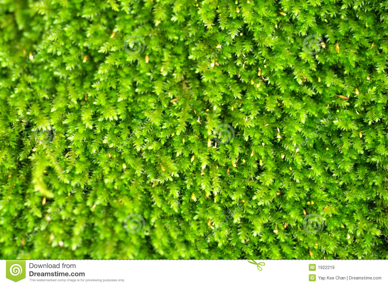 Bright Green Algae Royalty Free Stock Images.