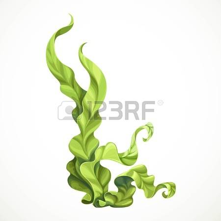 921 Green Algae Stock Illustrations, Cliparts And Royalty Free.