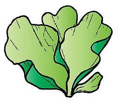 Green Algae Clipart Clipground