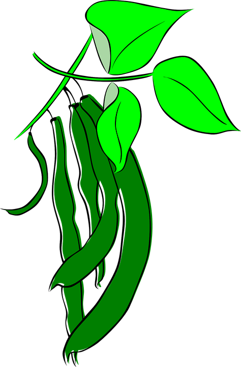 Bean, Plant.