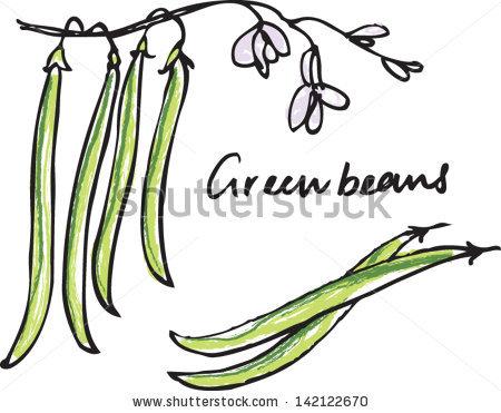 Fresh Green Beans Whole Sliced Vector Stock Vector 142122670.