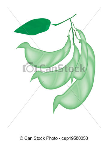 Clipart Vector of Fresh Hyacinth Bean Plant on White Background.