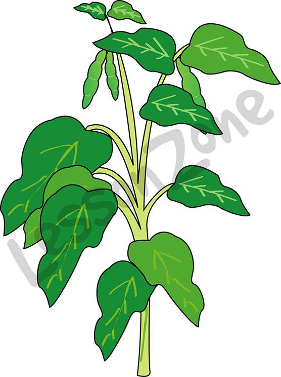 Clipart bean plant.