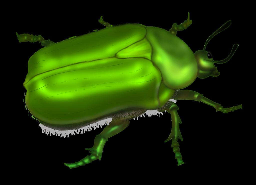 Green bug clipart.