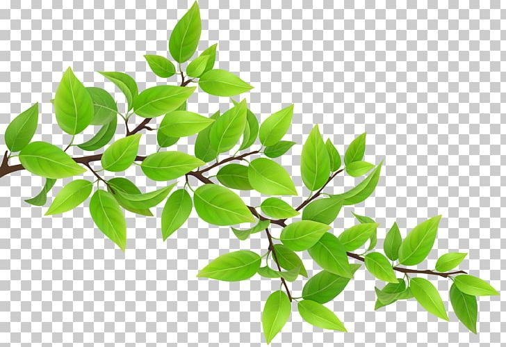 Branch PNG, Clipart, Apng, Art Green, Branch, Clipart, Clip.