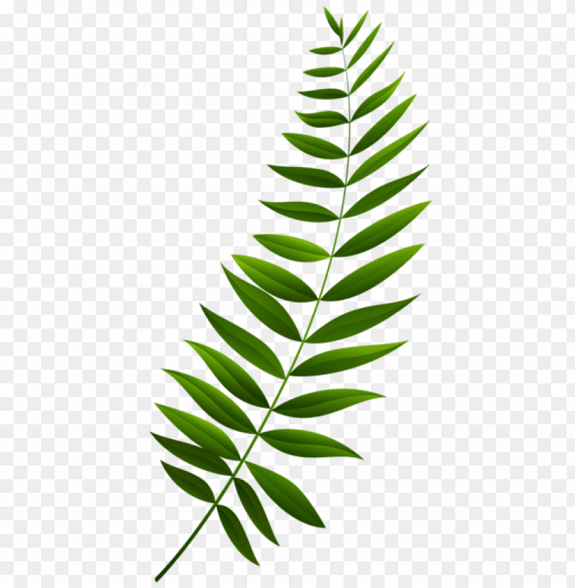 Download green branch transparent clipart png photo.