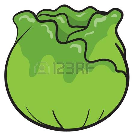 4,495 Green Cabbage Stock Illustrations, Cliparts And Royalty Free.