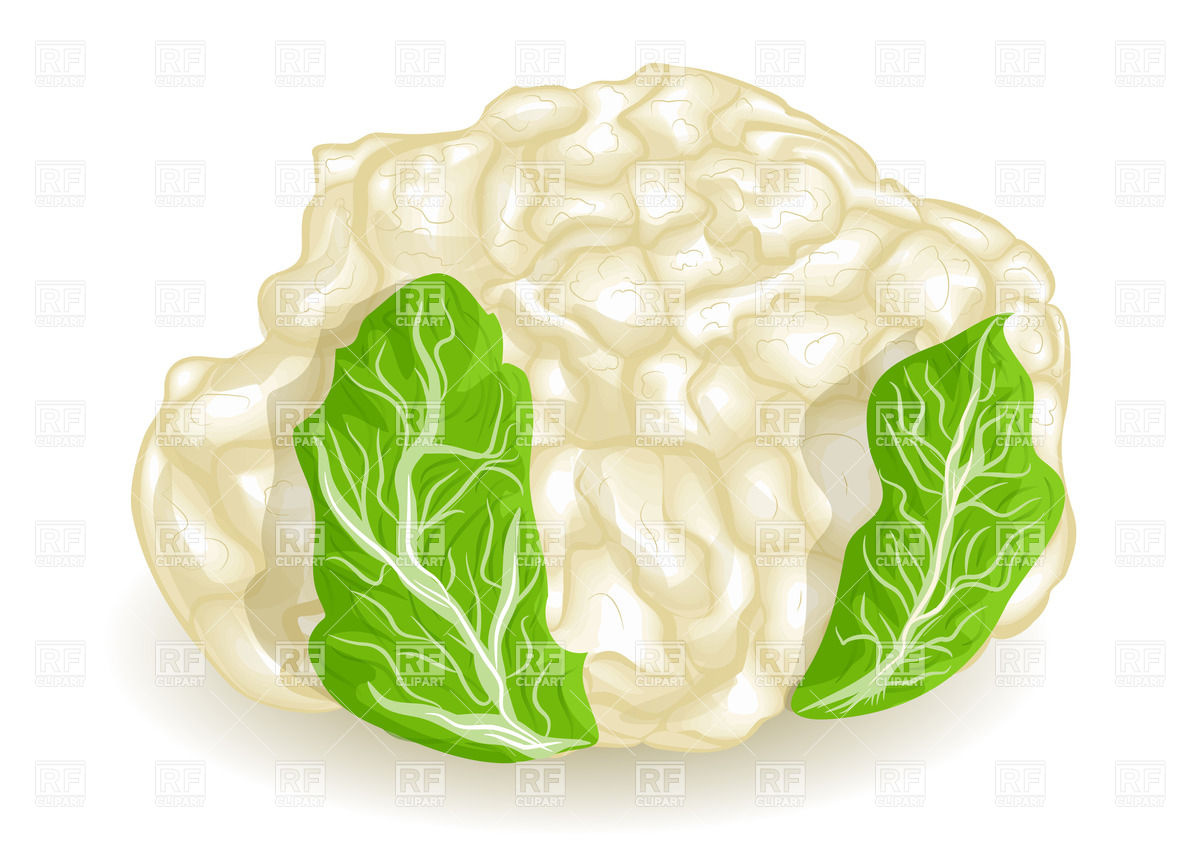 Cauliflower with green leaves Vector Image #27697.