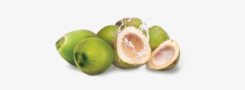 Green Coconut Png.