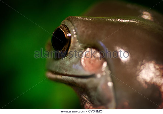 Reptile Eye Compound Eye Stock Photos & Reptile Eye Compound Eye.