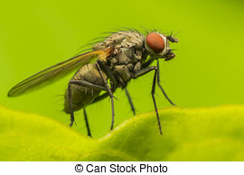 Stock Photography of Head of horse fly with huge compound eye in.