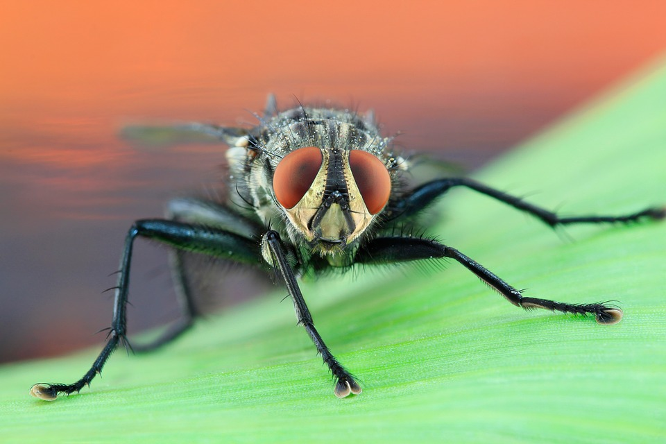 Free photo Macro Nature Insect Pest Housefly Fly Bug Eye.