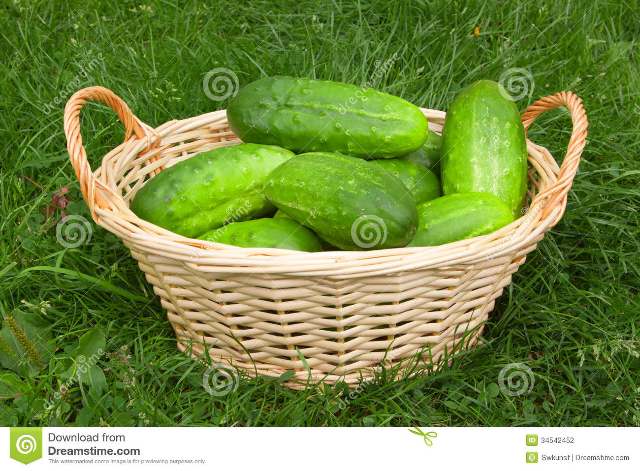 Fresh Cucumbers In The Vegetable Basket. Stock Photography.