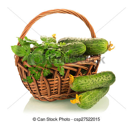 Stock Photography of Fresh cucumbers in basket isolated on white.
