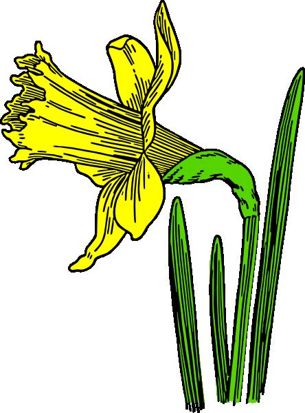 Daffodil Clip Art at Clker.com.