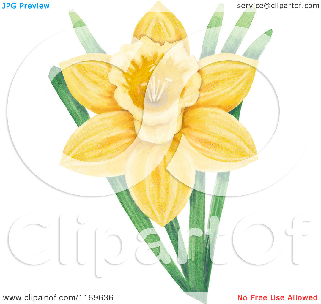 Clipart of a Yellow Daffodil Flower and Green Leaves.