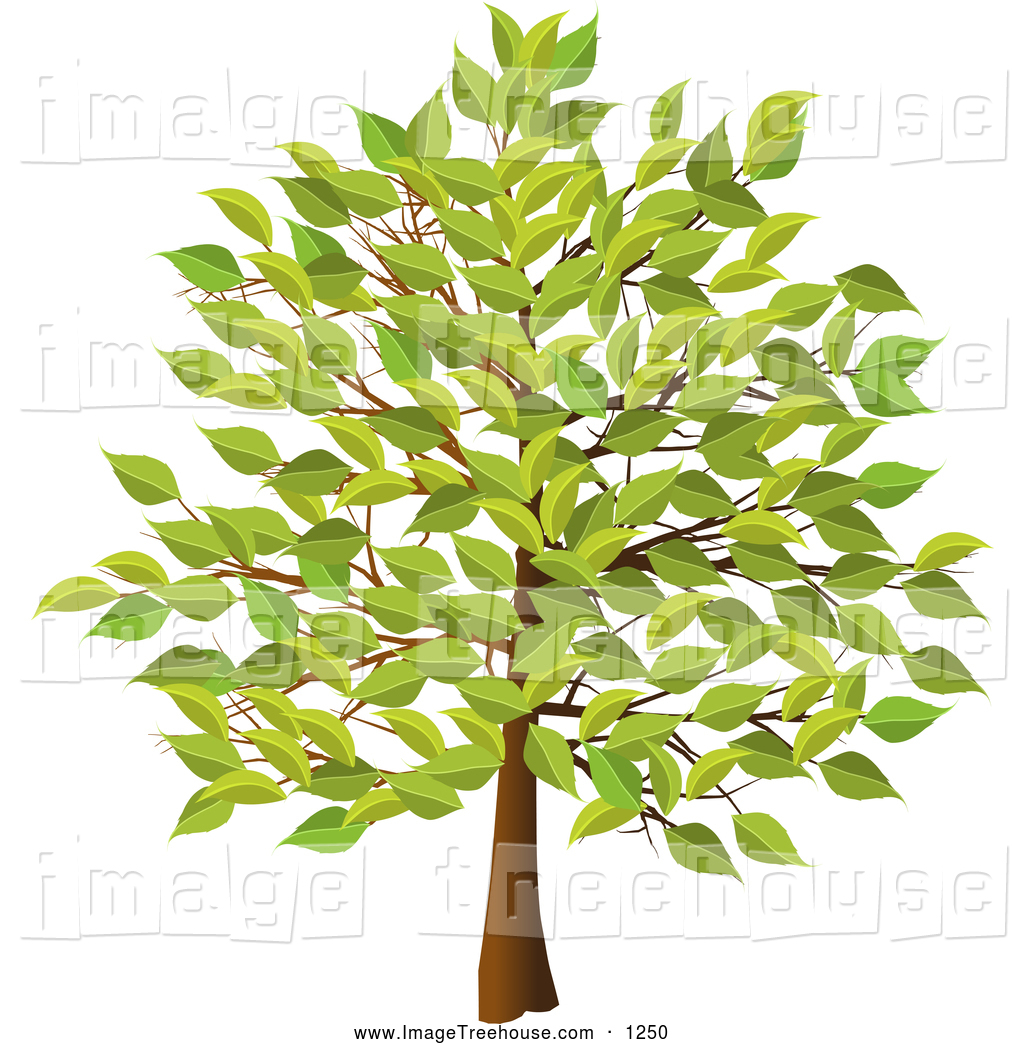 Royalty Free Foliage Stock Tree Designs.